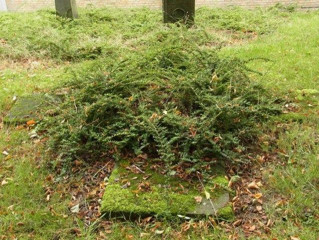 Zugewachsenes Grabmal, Foto: Winfried Prehn